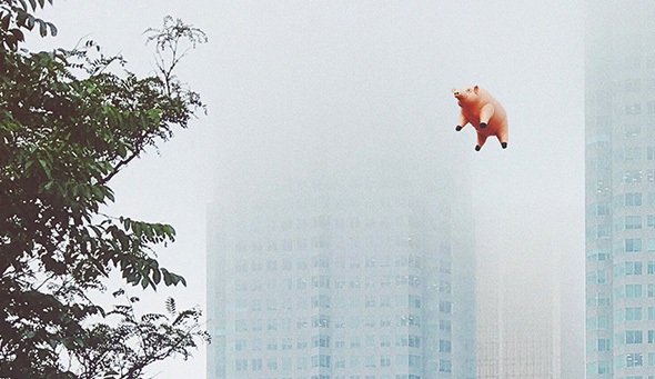 When Pigs Fly or How Animal Organs Can Help Save Human Lives